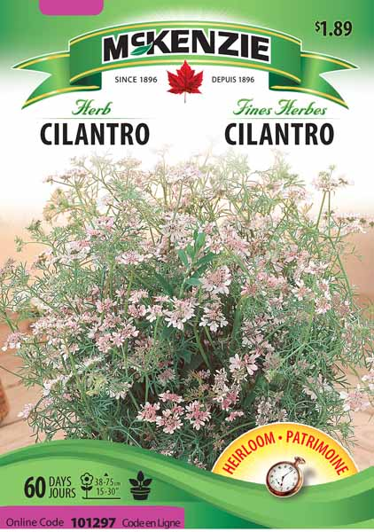 how to grow cilantro in texas