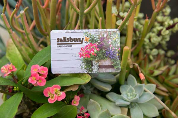 Salisbury Greenhouse Gift Card